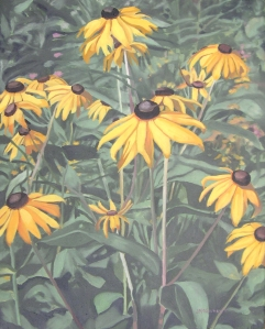 Black Eyed Susans, 2011
