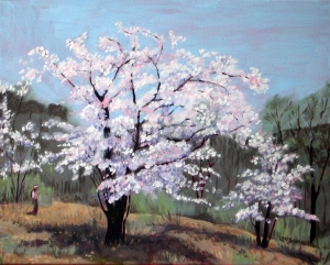 Cherry Blossoms # 3, 2012, 20 x 16, Oil on canvas
