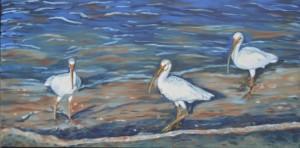 Ibis Series 2 Wading 15 x 30 2015 - Copy