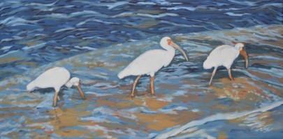 Ibis Series 4 Wading 15 x 30 2015 - Copy