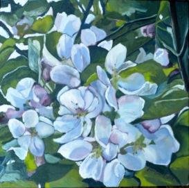 Cherry Blossoms 2014 12 x 12 web