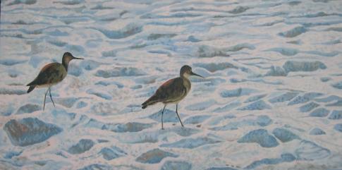 Willets on Beach Florida 2011 best