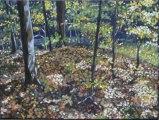 Autumn Forest 12 x 16