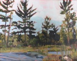 Pine Trees, Oil 8 x10 2017