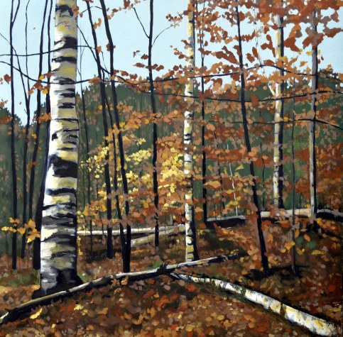 Angonquin Birches v more