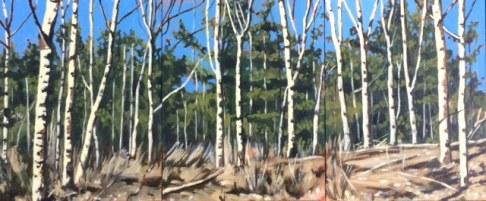 Birches Triptych 3 times 8x10